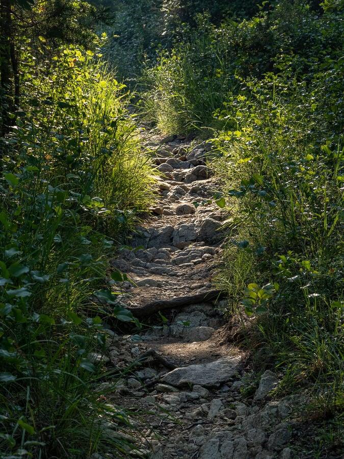 Serpentine barrens rocky path uphill