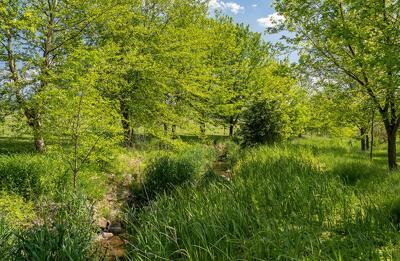 Streamside trees, PA
