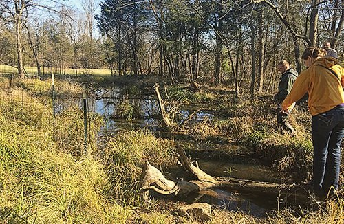 Catch the spring action at a vernal pool near you