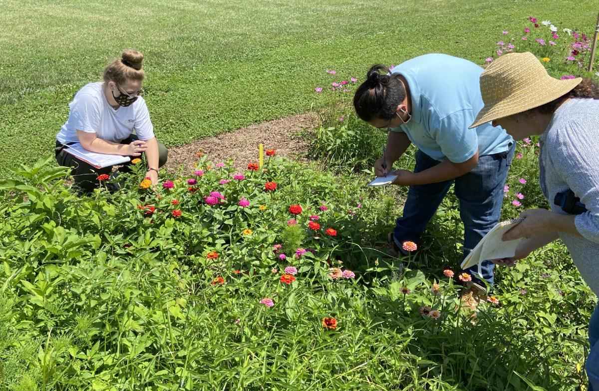 Entomologists seek bugs in field