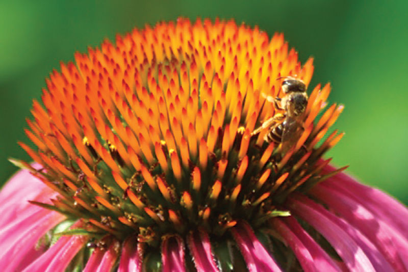 If you like plants, bee grateful for pollinators this month