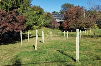 Converting lawn to woods
