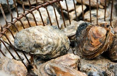 Oysters in basket