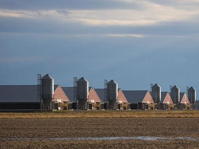 Poultry houses on Maryland's Eastern Shore