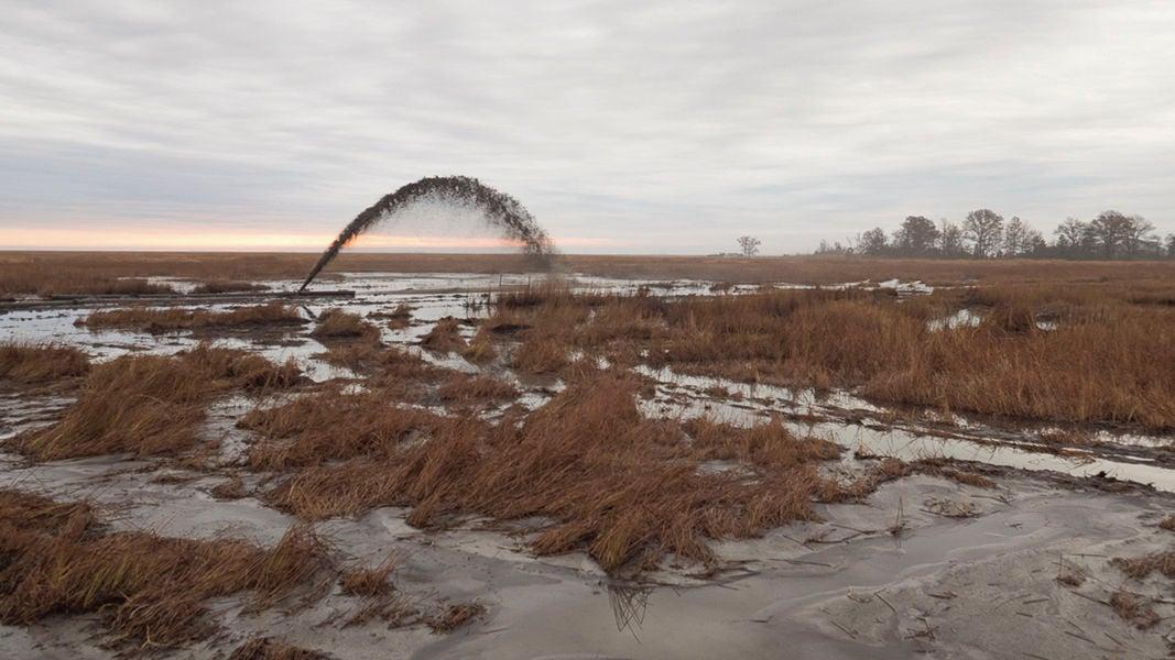 Blackwater National Wildlife Refuge thin-layering