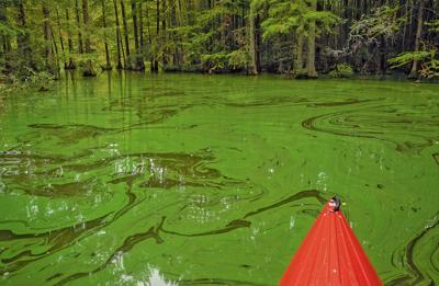 Algae by kayak
