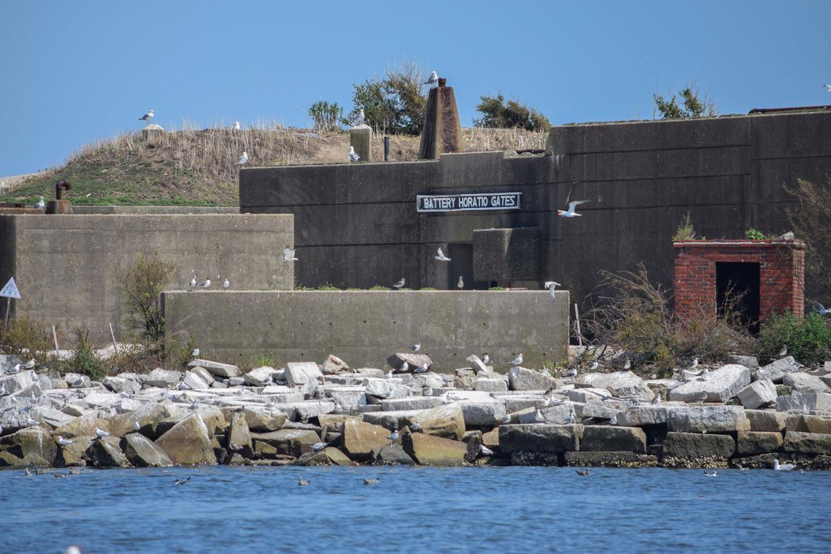 Seabirds at Fort Wool, VA