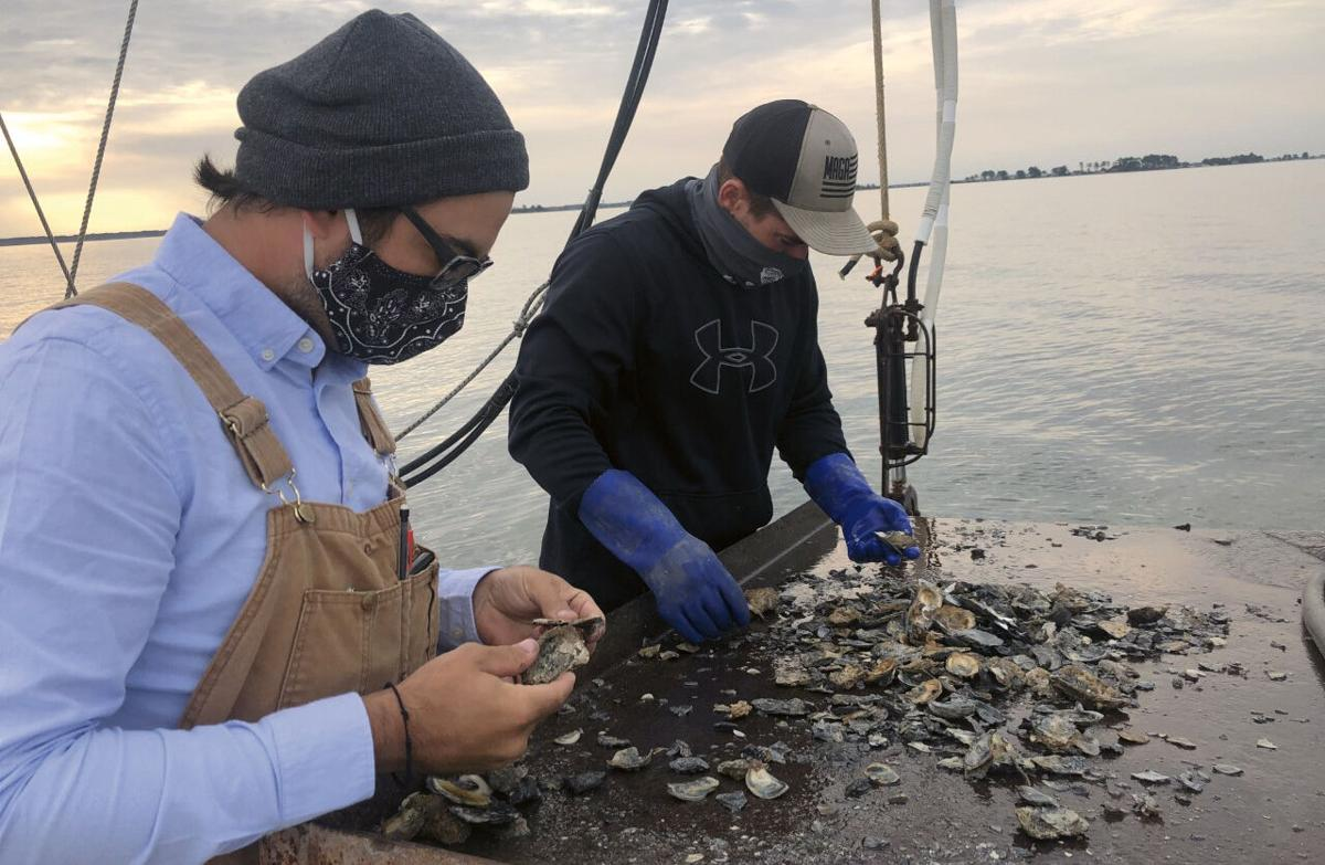 Oyster sorting on the Manokin River