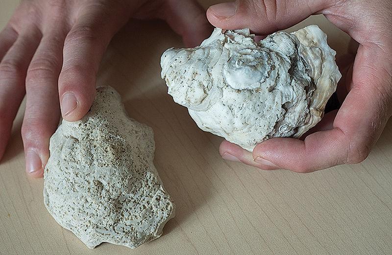 Artificial oyster shells