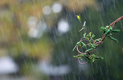 Rainfall with branch 2