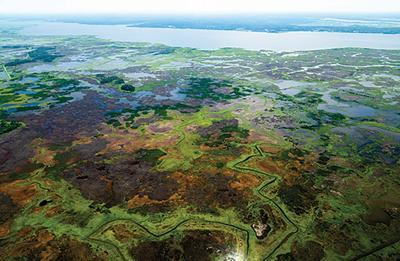 Wetlands at Blackwater National Wildlife Refuge, MD