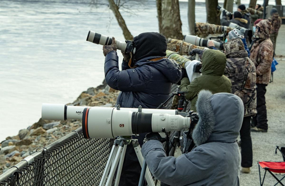 Eagle photographers