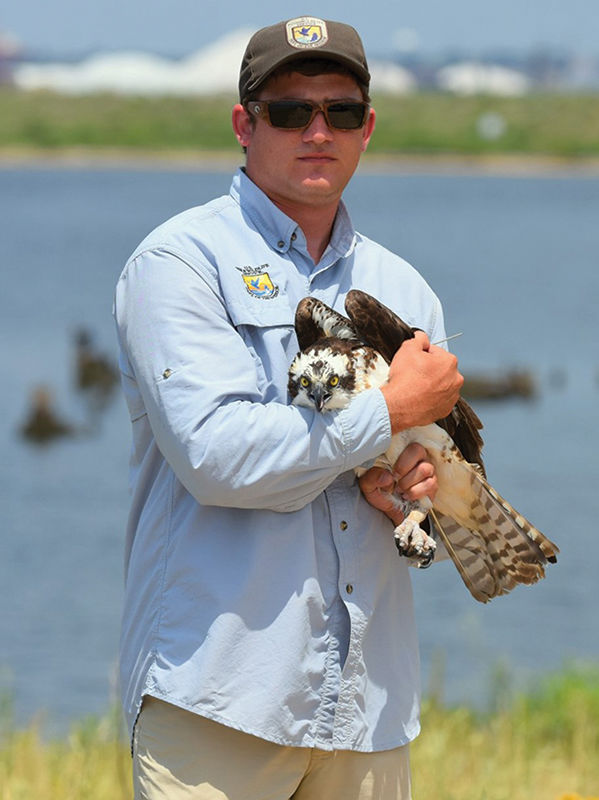 Hurricanes no match for Baltimore's Harriet the Osprey on her fall trek
