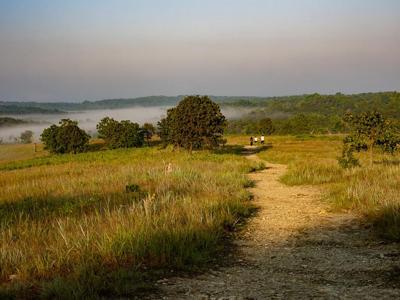 Harsh beauty: Take a walk in serpentine barrens