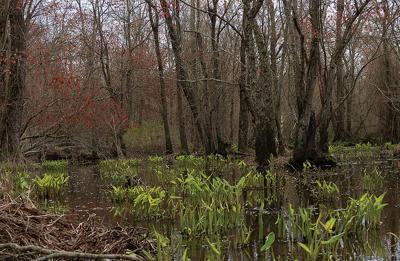 Marshyhope Creek, MD