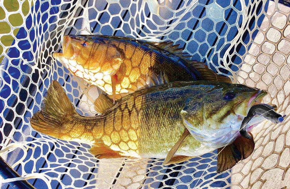 Net of smallmouth bass from Susquehanna