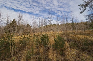 Solar facility planned for Southern MD forest comes under fire