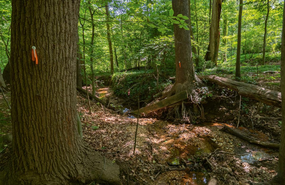 Trees to removed by stream