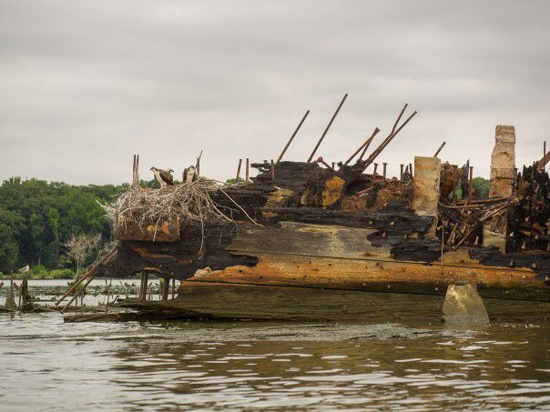 Mallows Bay vessel with osprey nest, Potomac River