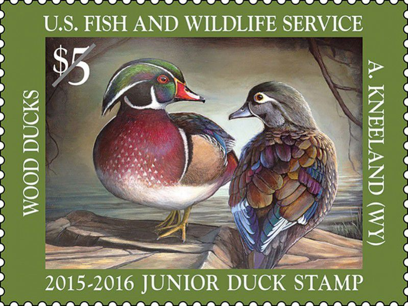 Federal duck stamps to preserve habitat aren't just for hunters