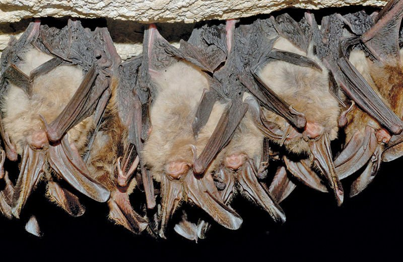 We must protect bats as if our lives rely on each other, because they do
