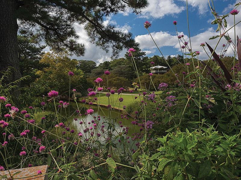 'Dig a little deeper' at the Norfolk Botanical Garden