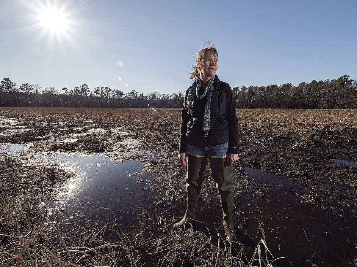 'Delmarva bay' wetlands, MD