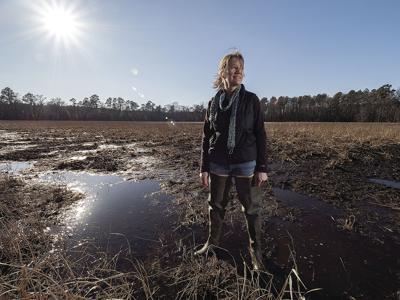 'Delmarva bay' wetlands wotus