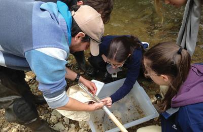To cure the Bay, take a healthy interest in your local stream
