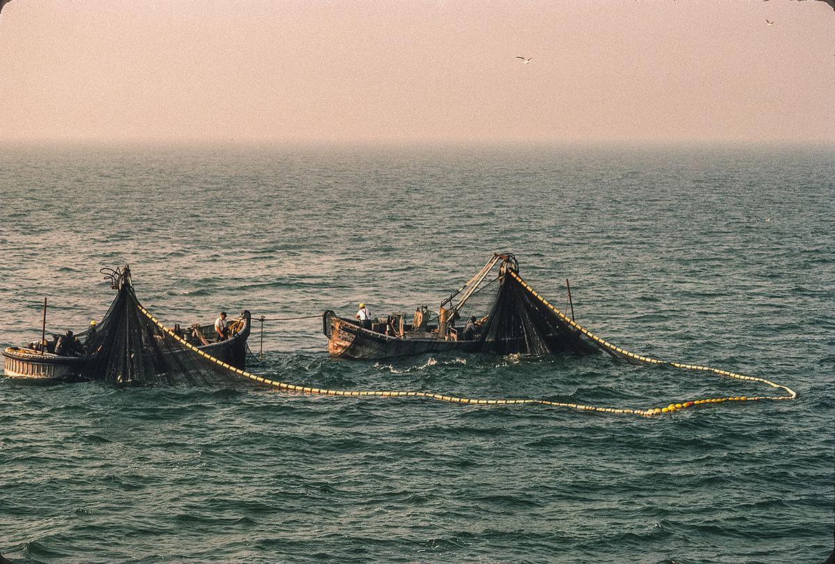 Purse net fishing for Atlantic menhaden