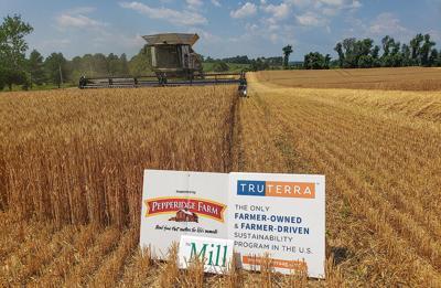 Wheat harvest by Truterra partner farm