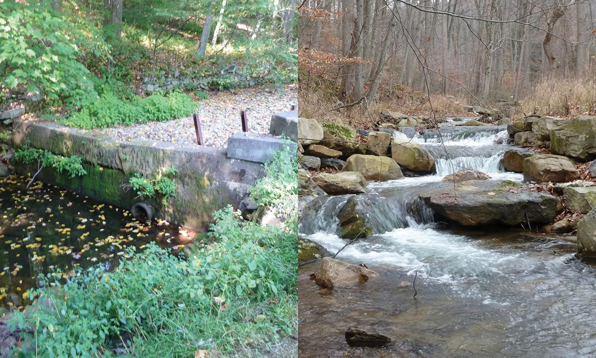 Stream after culvert removal