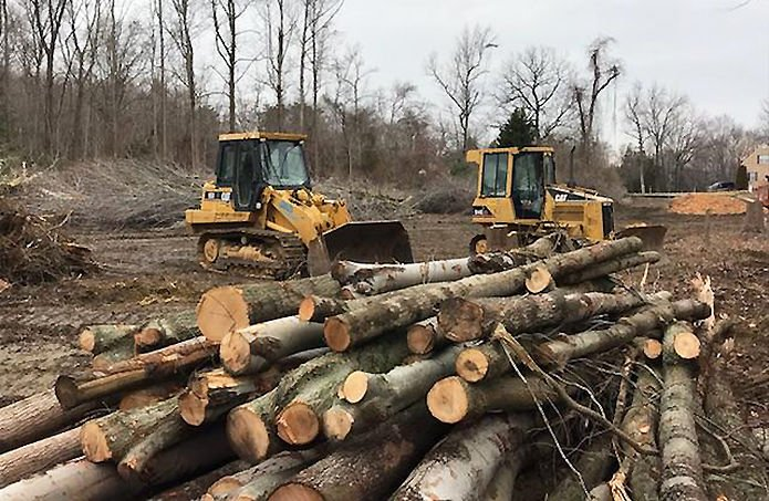 Forest cutting in MD 2