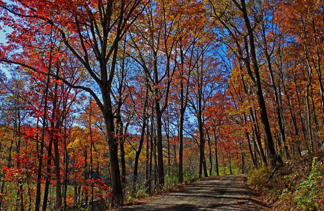 Autumn trees in Maryland
