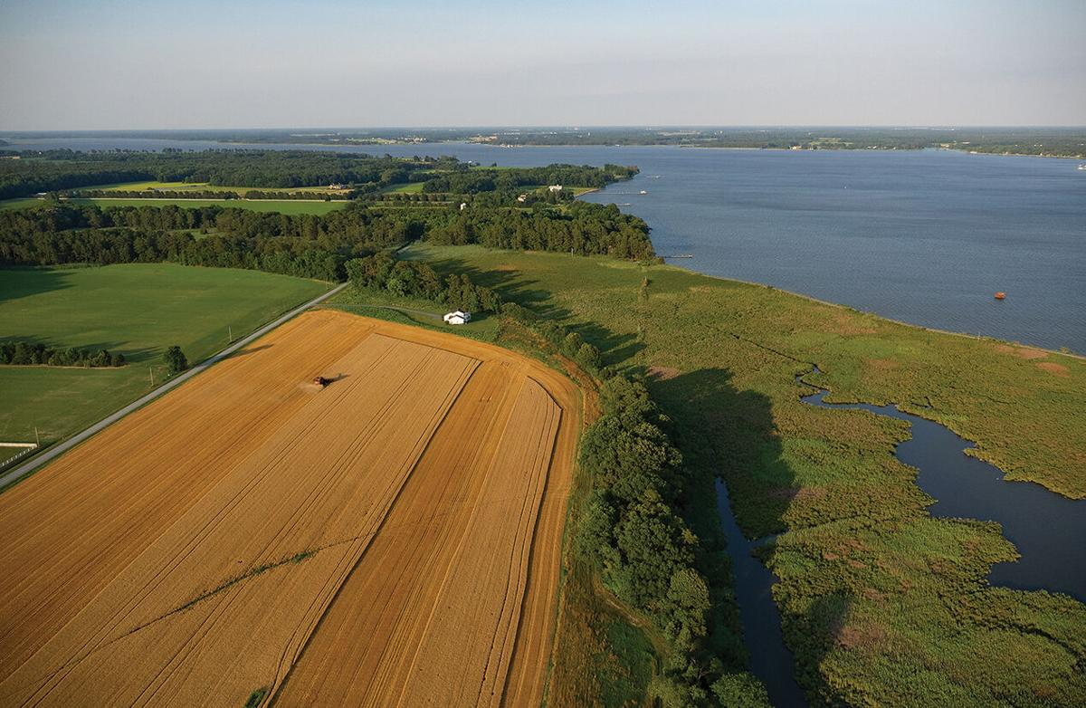 Farmland along the Choptank River, MD
