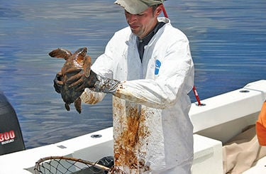 Bay scientists: Offshore oil drilling would put Chesapeake Bay at risk