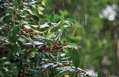 Rain on foliage