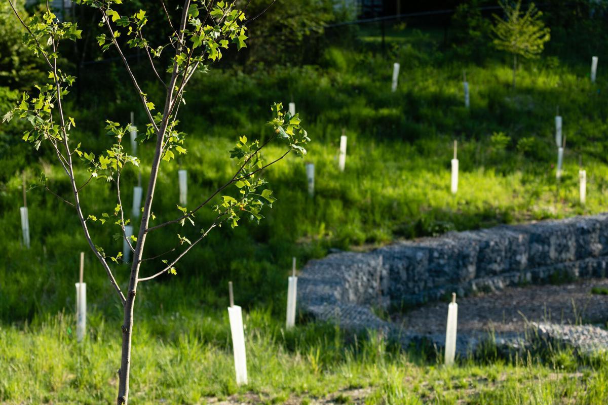 Tree planting in Hopewell, VA
