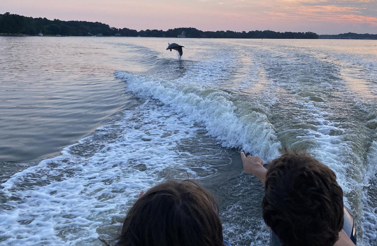 Dolphin in boat wake