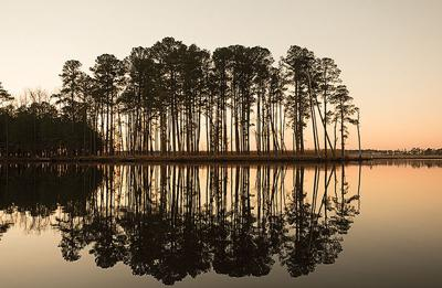 Tree silhouettes by water