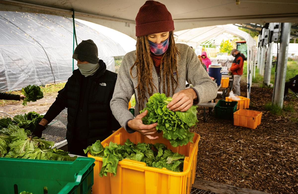 Binghamton Urban Farm
