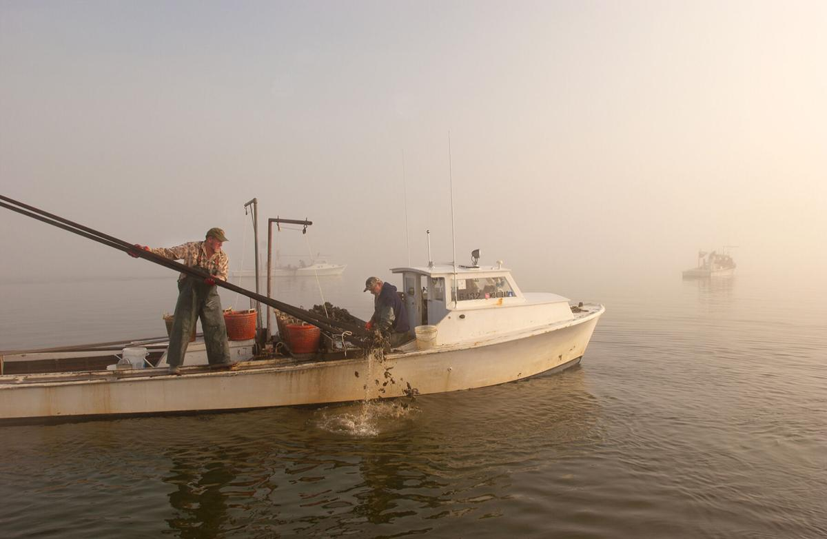 Oyster tonging in the Choptank River, MD