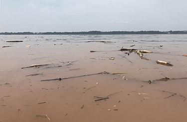 Washed away? Torrential rains threaten Bay restoration gains