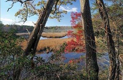 Explore lesser-known preserves on Virginia's Northern Neck