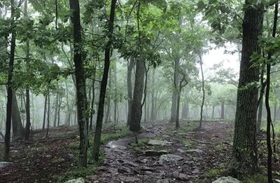 Appalachian Trail in mist