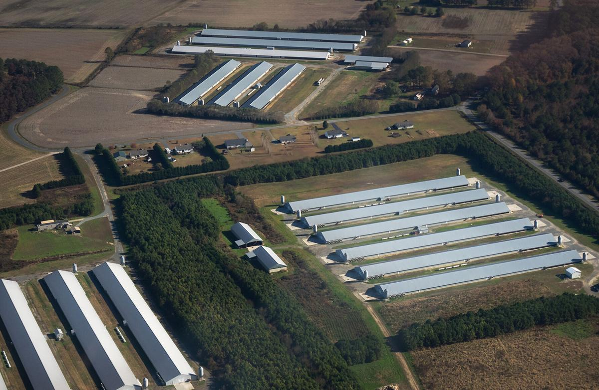 Aerial view of chicken houses