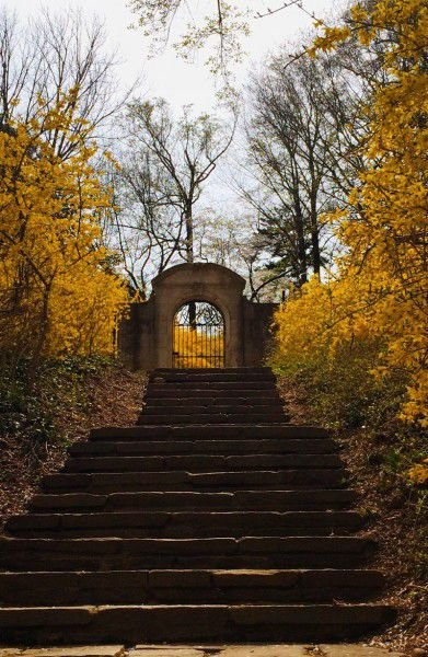 Immerse yourself in Dumbarton Oaks Park