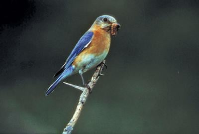 Celebrate 100 years of bird conservation by helping migratory species