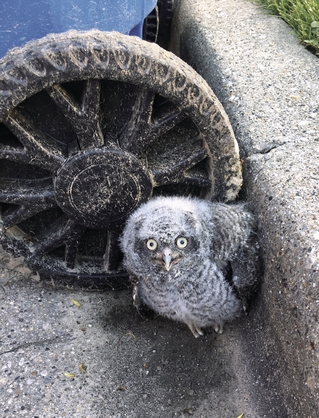 Owlet returned to its home