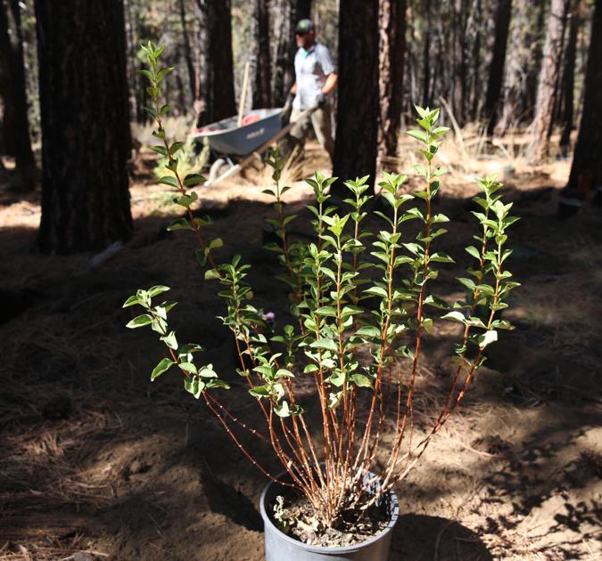 High Desert Museum plants garden to protect pollinators